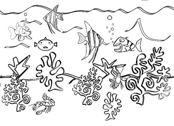 580x420 Coloring Pages Of Sea Animals Free Coloring