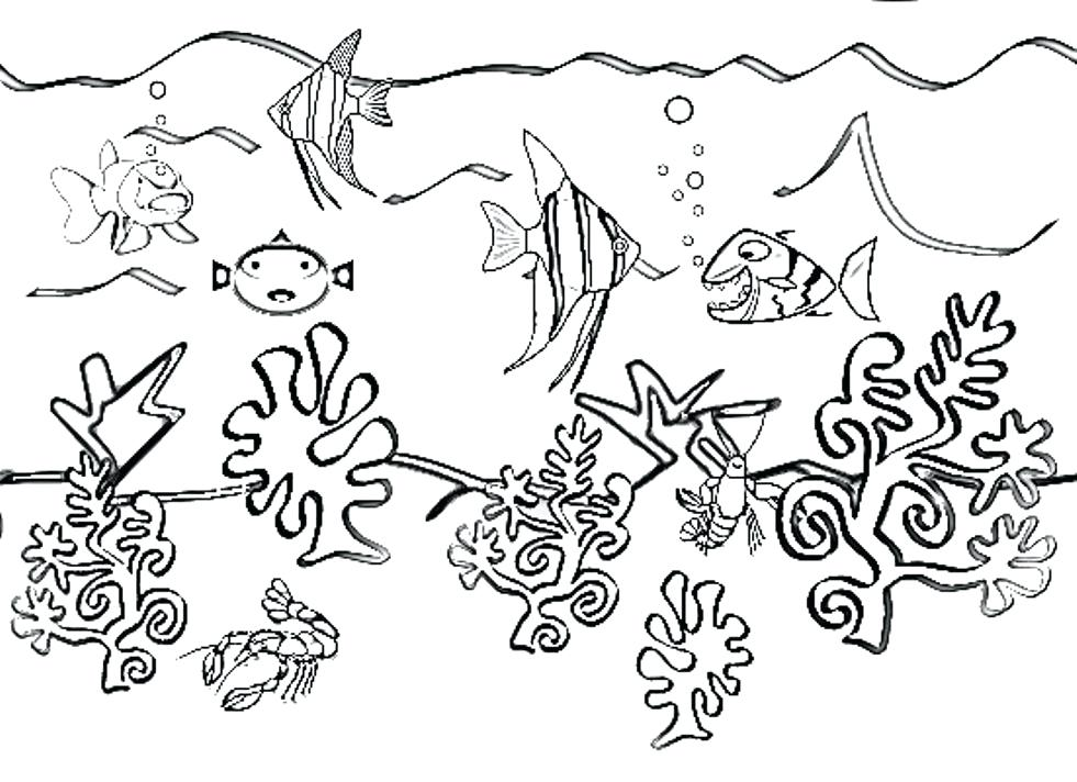 Sea Animals Drawing At Getdrawings Com