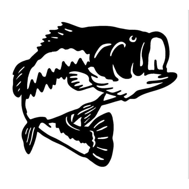 Sea Bass Drawing