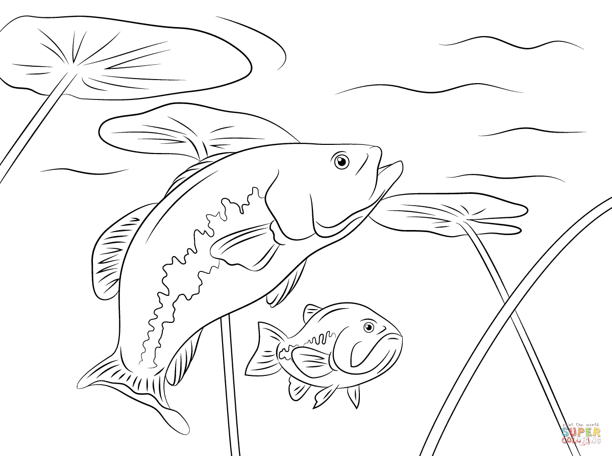 1199x894 Largemouth Bass Coloring Pages Largemouth Bass Drawings