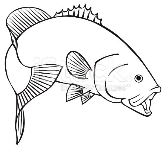 556x498 Black Line Illustration For A Smallmouth Bass Vector Art, Vector