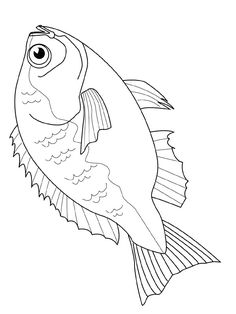 236x314 How To Draw A Bass Fish What To Eat Draw