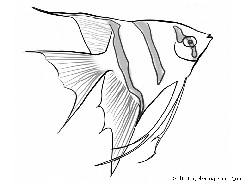 1024x768 Underwater Sea Creatures Coloring Pages