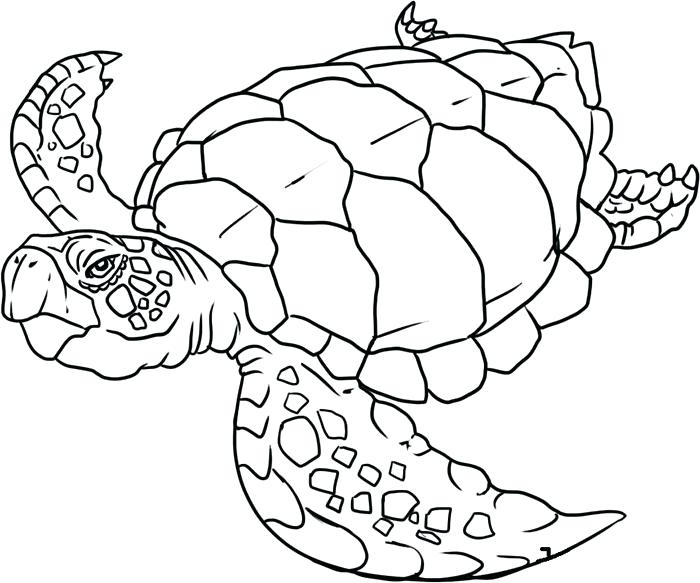 700x583 Printable Ocean Animals Source A Ocean Animals Coloring Pages