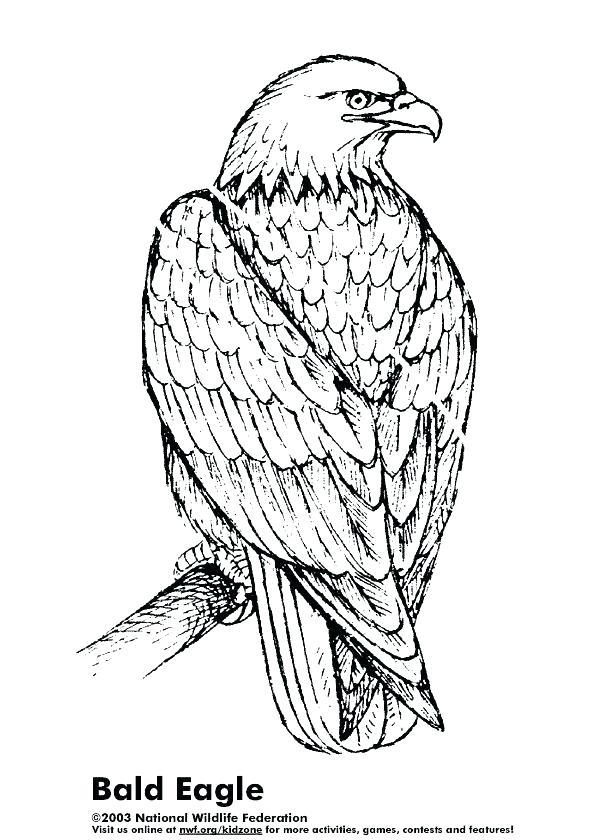 612x840 Eagle Coloring Book Also Eagle Coloring Book 2 Pin Bald Eagle