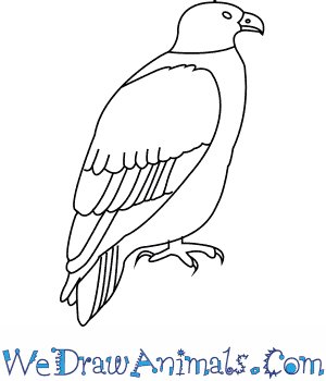 300x350 How To Draw A White Tailed Eagle