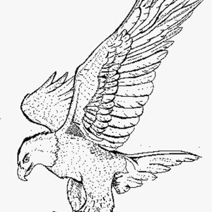300x300 Online Free Coloring Pages For Kids