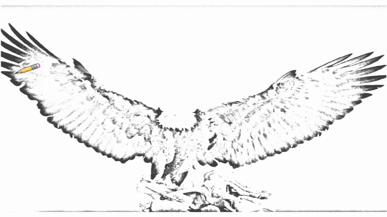 1280x720 Auto Draw 2 Bald Eagle, Kachemak Bay, Kenai Peninsula, Alaska