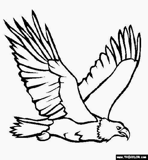 493x534 Bald Eagle Head Coloring Page