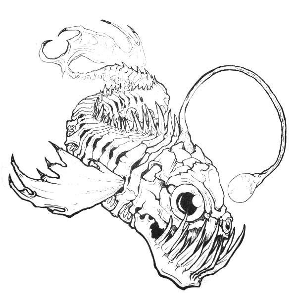 600x614 Angler Fish Bone Anatomi Coloring Pages Best Place To Color