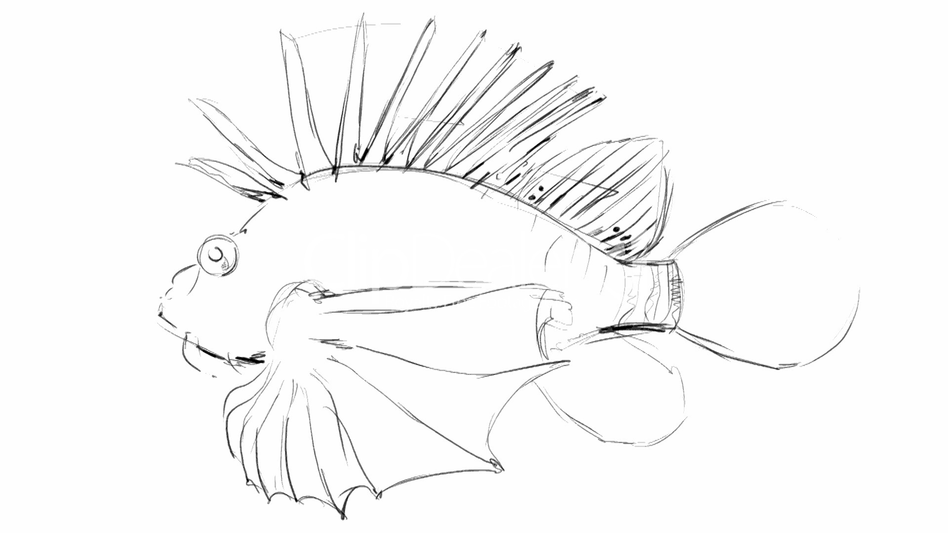 1920x1080 Pencil Sketch Of Sea Fish Royalty Free Video And Stock Footage