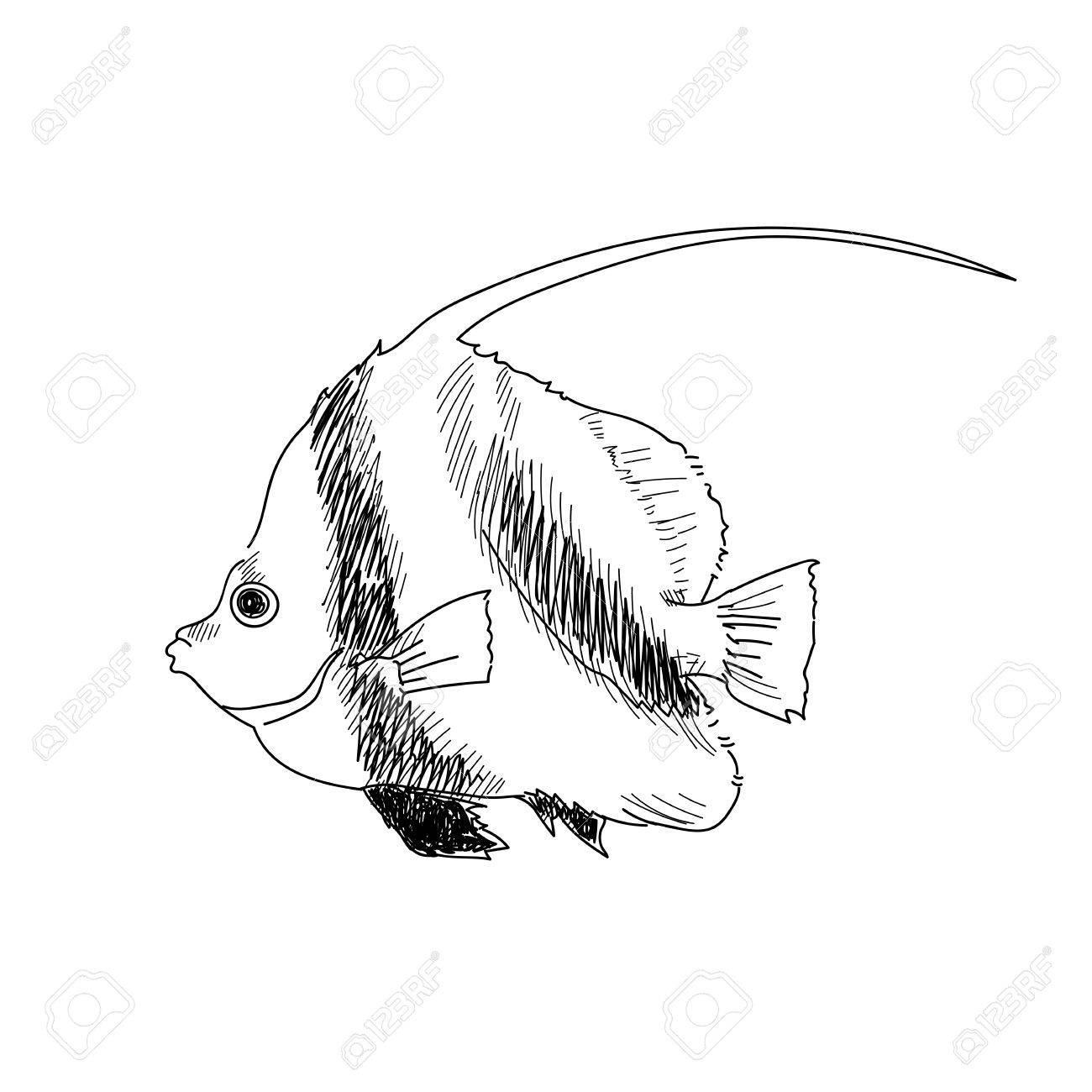 1300x1300 Sea Fish Hand Drawn Sketch Illustrations Of Engraved Line Stock