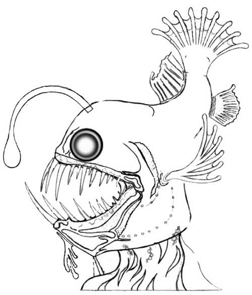 500x585 Deep Sea Creatures Coloring Pages
