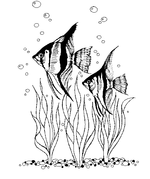Sea Floor Drawing At Getdrawings Com