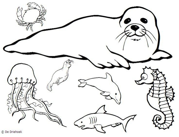 Sea Life Drawing at GetDrawings.com | Free for personal use Sea Life ...
