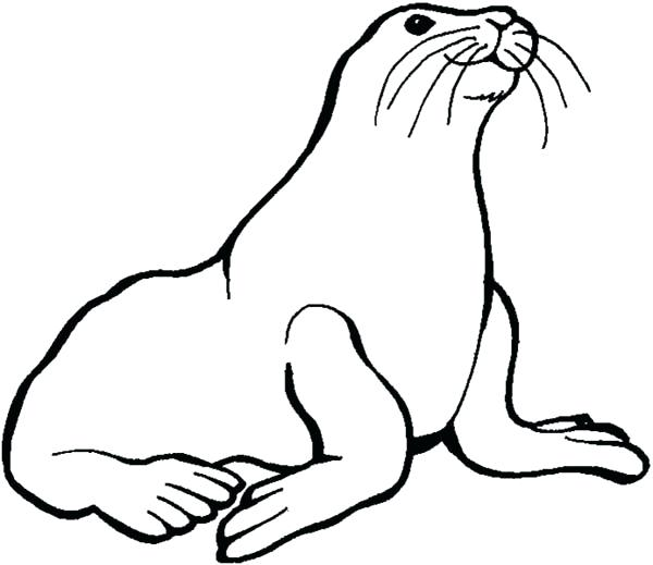sea lion coloring page - sea lion drawing at free for personal