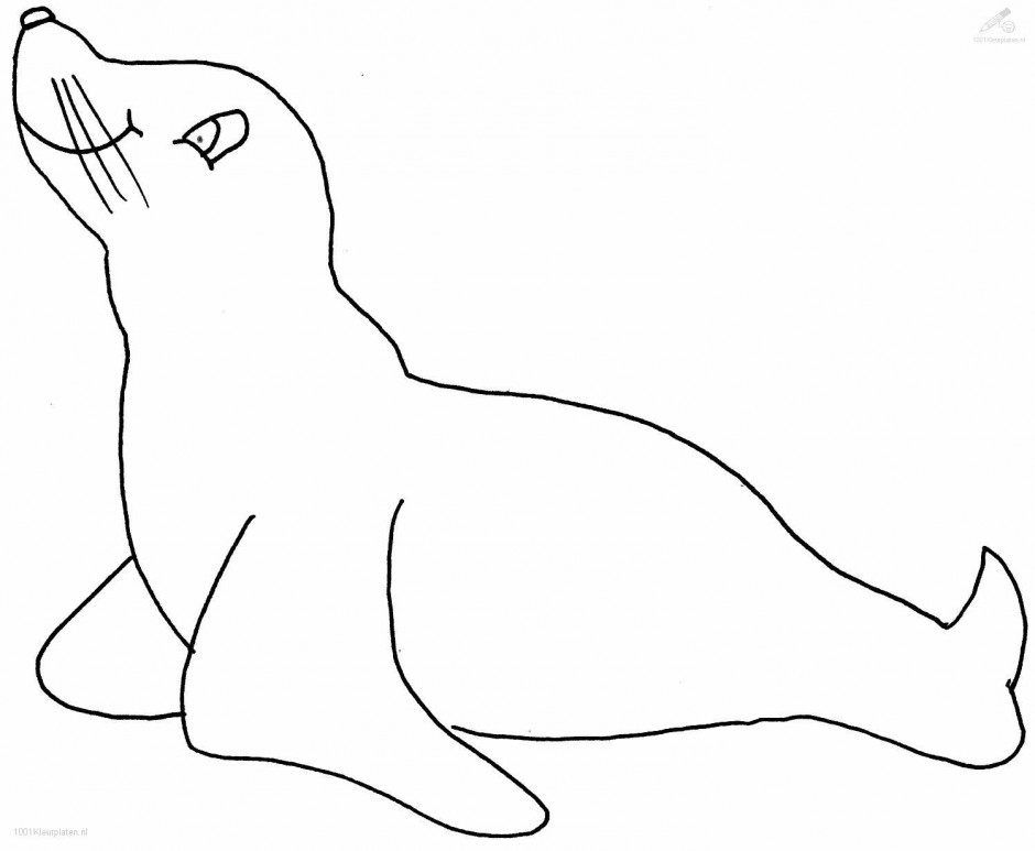 Sea Lion Drawing at GetDrawingscom Free for personal use Sea Lion