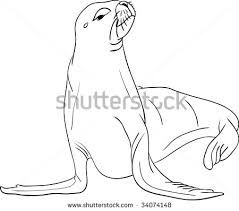 Sea Lions Drawing