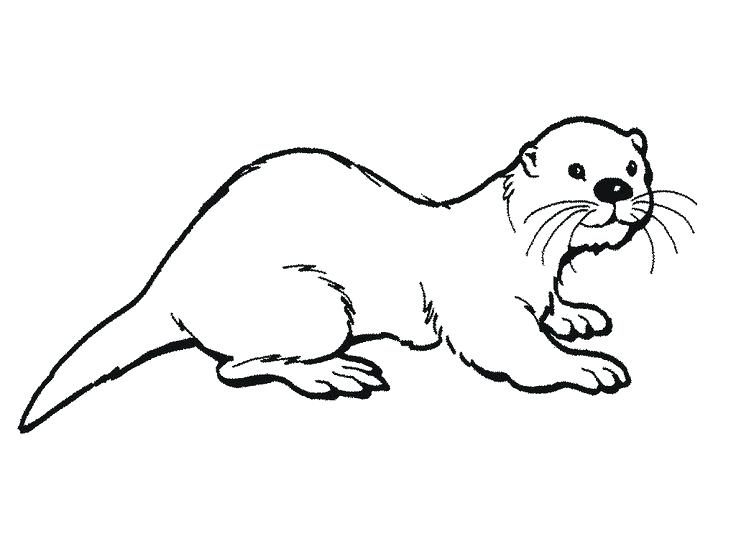 736x552 Sea Otter Coloring Page Pin Sea Otter Black And White 3 Baby Sea