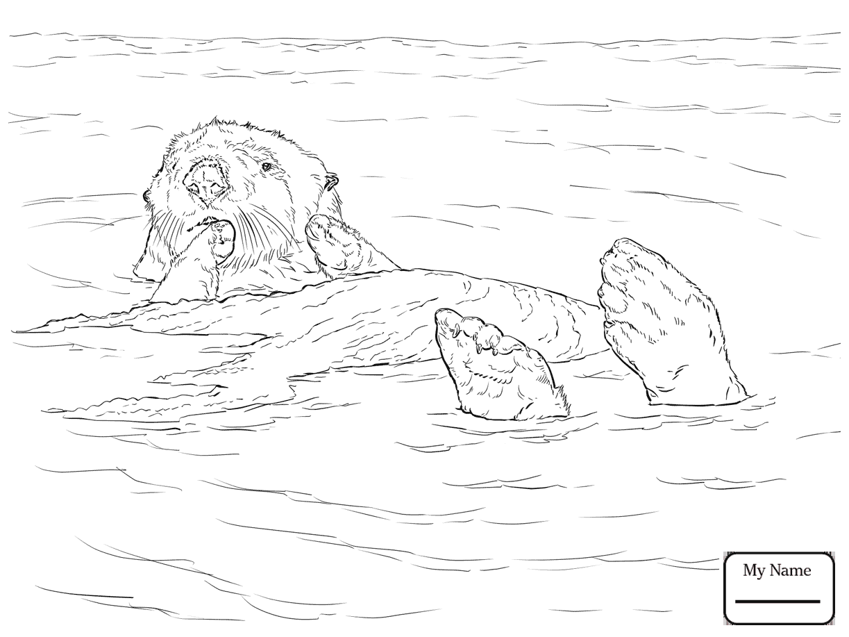 Sea Otter Drawing at GetDrawings.com | Free for personal use Sea ...