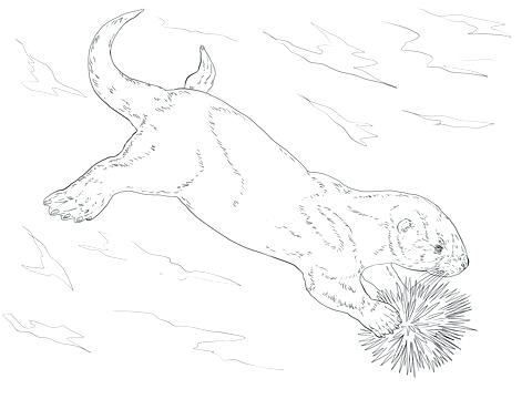 480x360 Sea Urchin Coloring Page Sea Otter Coloring Page Free Download Sea