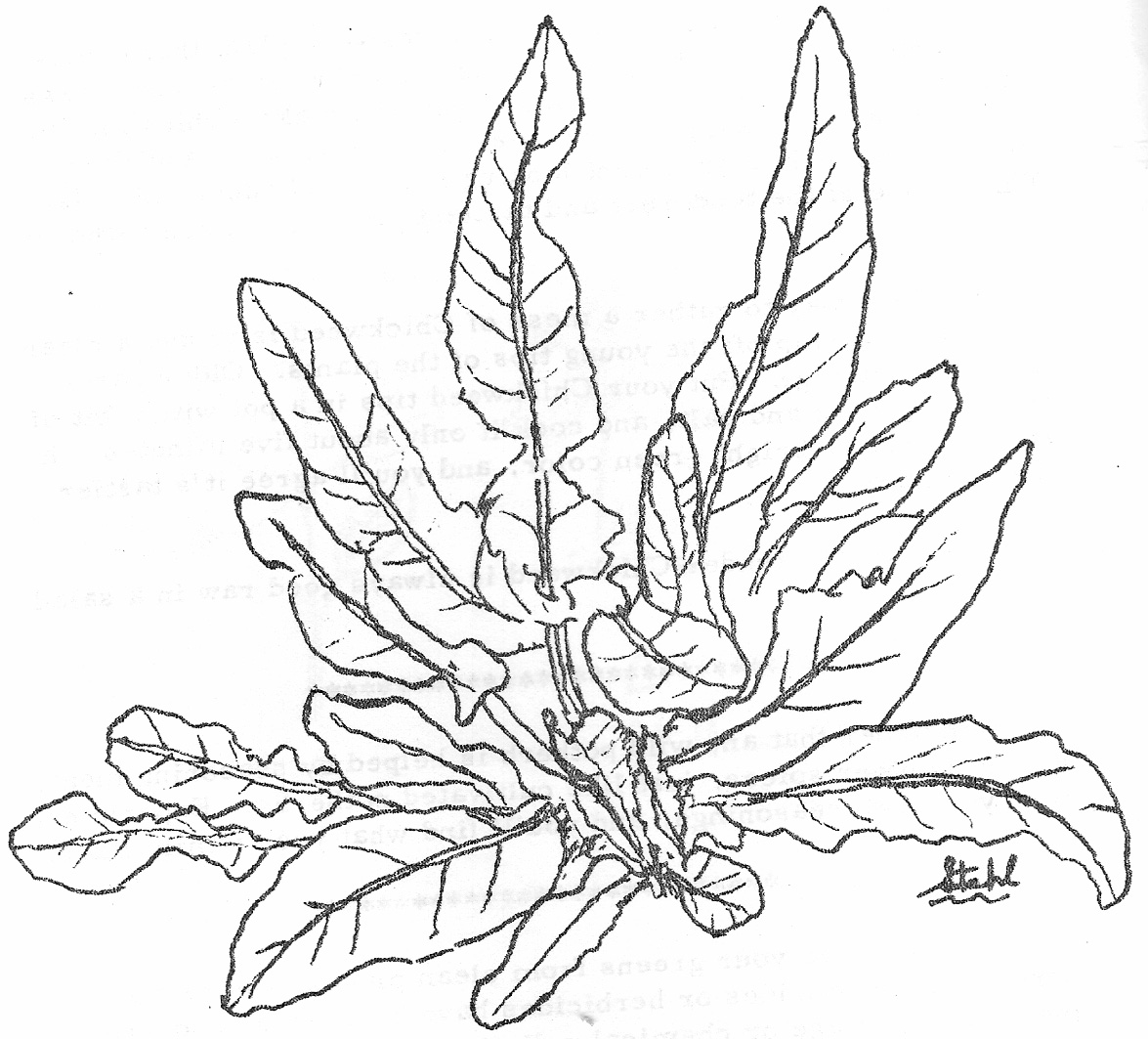 ocean plants coloring pages - photo#13