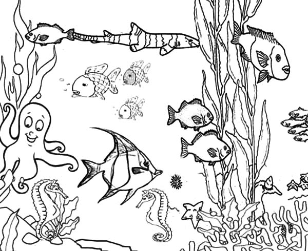 600x490 Free Printable Ocean Coloring Pages Of