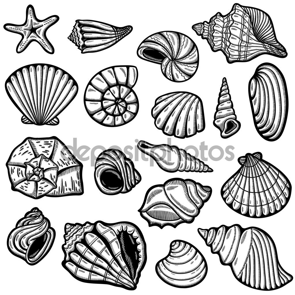 1024x1024 Image Result For Sea Shell Line Drawing Block Printing