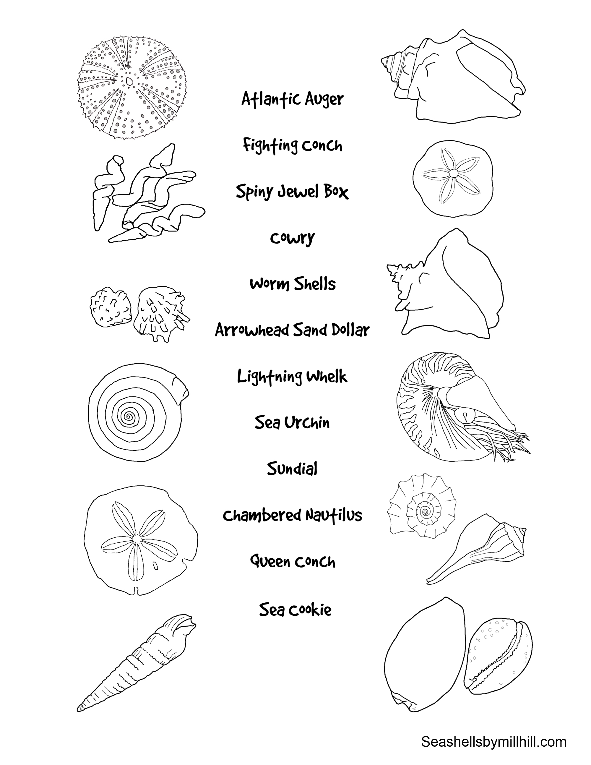 2000x2588 Match The Seashells To Their Names Worksheet Seashells By Millhill