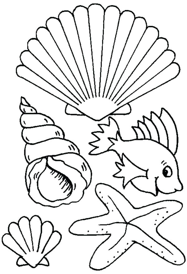 600x879 Sea Shell Coloring Page Decorative Sea Shell Outline Drawing