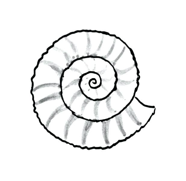 618x600 Sea Shells Coloring Pages Sea Shells Coloring Pages Free Shell