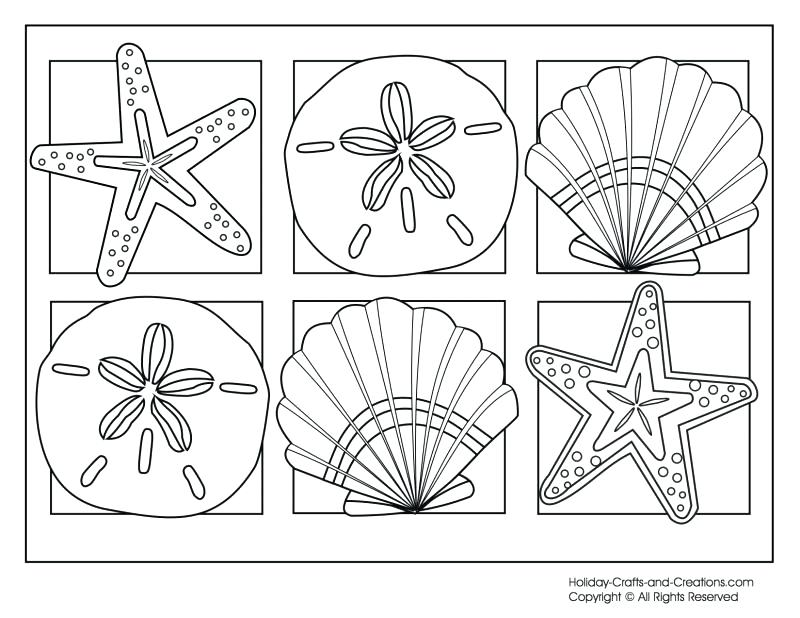 800x618 Sea Shells Coloring Pages Seashell Sea Shell Coloring Pages Free