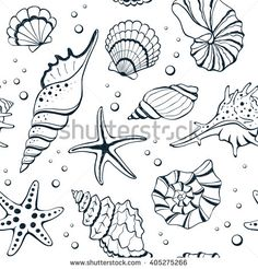 236x246 Sea Shell And Coral. Set Engraving Vintage Vector Illustrations
