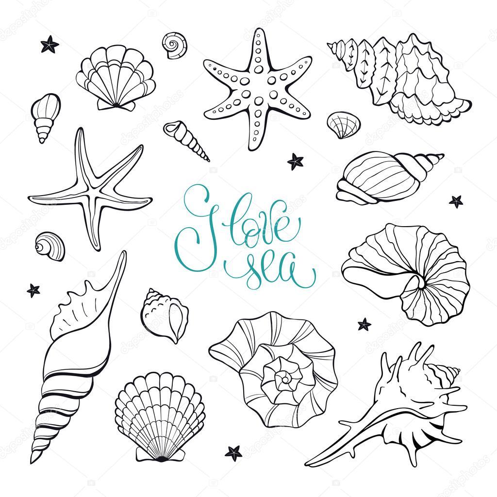 1024x1024 Sea Shells Collection Stock Vector Ollymolly