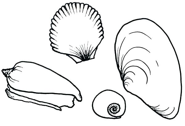 600x409 Seashell Coloring Pages Seashell Coloring Pages For Kids Sea