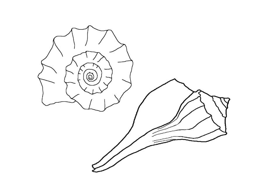 900x655 seashells coloring pages
