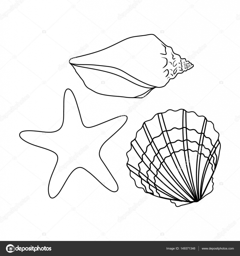 963x1024 Seashells From The Bottom Of The Sea.summer Rest Single Icon