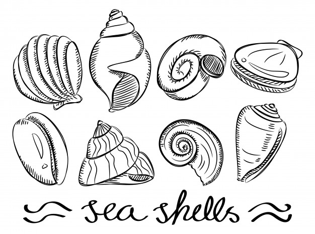 626x465 Set Of Various Sea Shells In Doodle Style Vector Premium Download