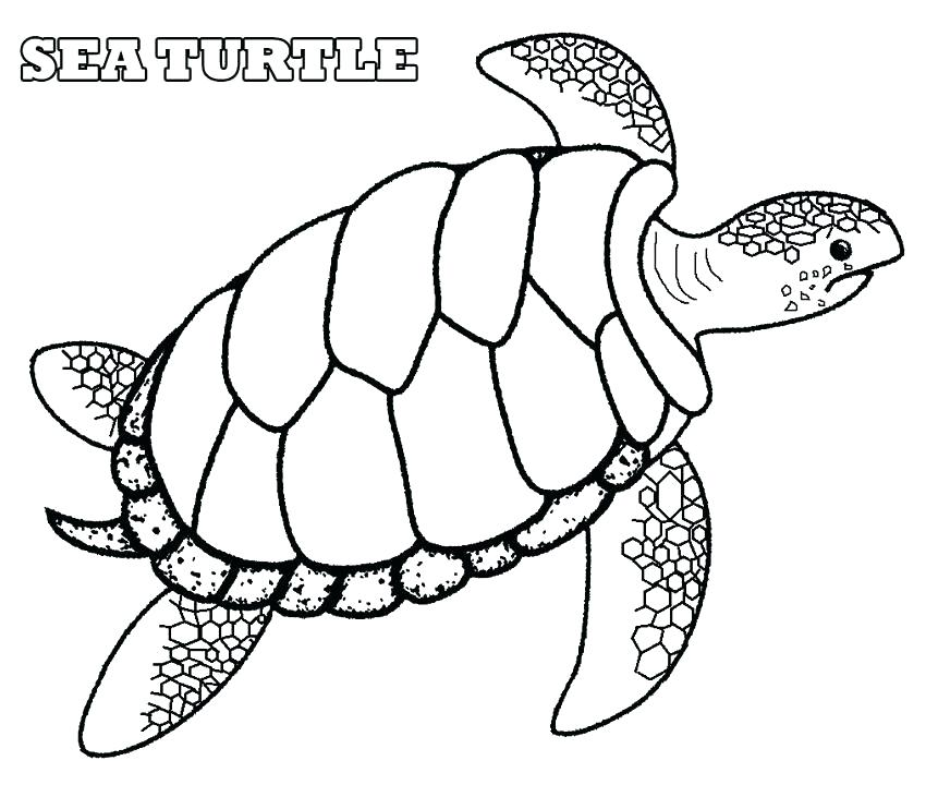 850x731 Top Seashell Coloring Pages Print Perfect Printable Best