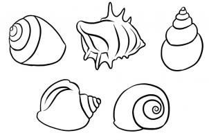 302x202 How To Draw Shells Step 5 Ocean Shell, Drawings