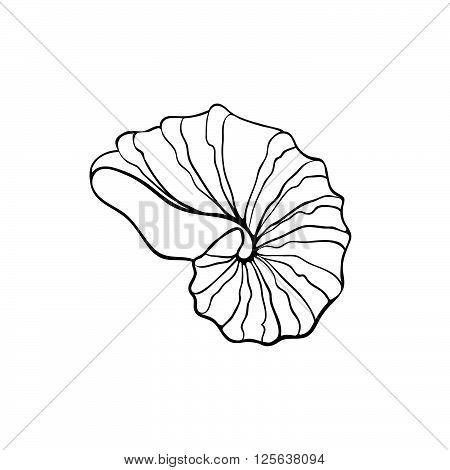 450x470 Hand Drawn Sea Shell. Nautilus Vector Amp Photo Bigstock