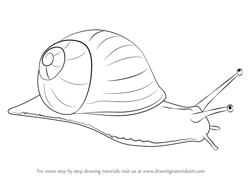 800x566 Learn How To Draw A Snail (Snails) Step By Step Drawing Tutorials