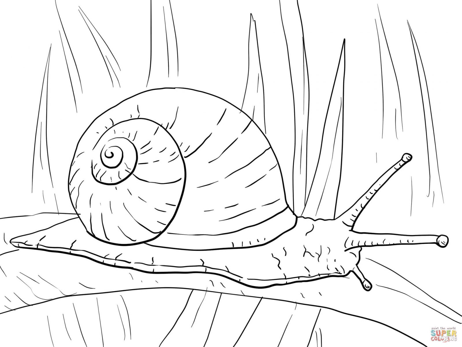 1600x1200 Snail Coloring Pages Free Download And Print Cute Printable