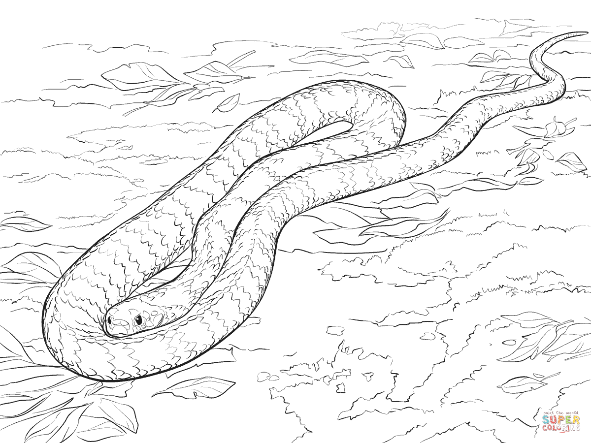 Sea Snake Drawing At Getdrawings Com Free For Personal