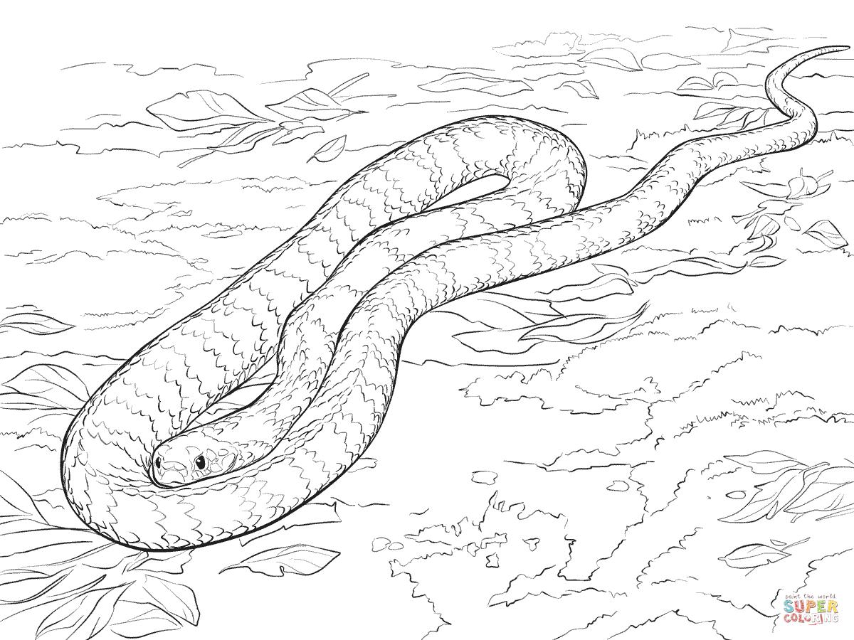 sea snake drawing at getdrawings free