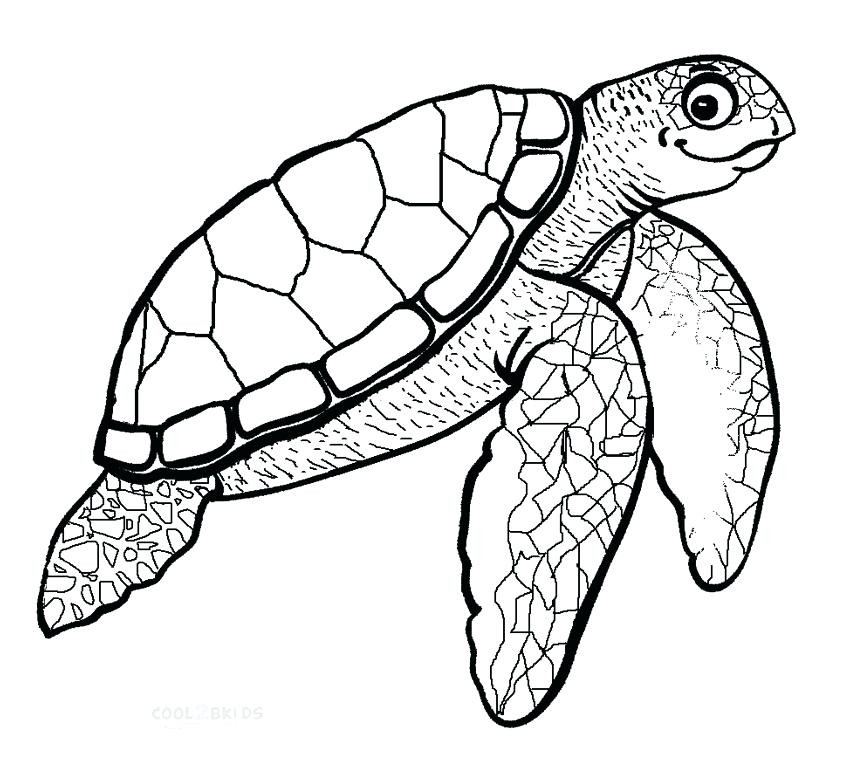 Sea turtle drawing for kids at free for for Sea turtles coloring pages