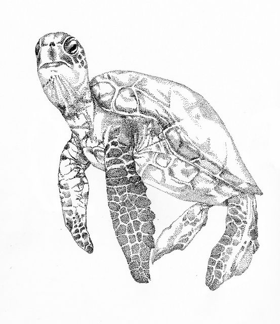 Sea Turtle Drawing Tumblr