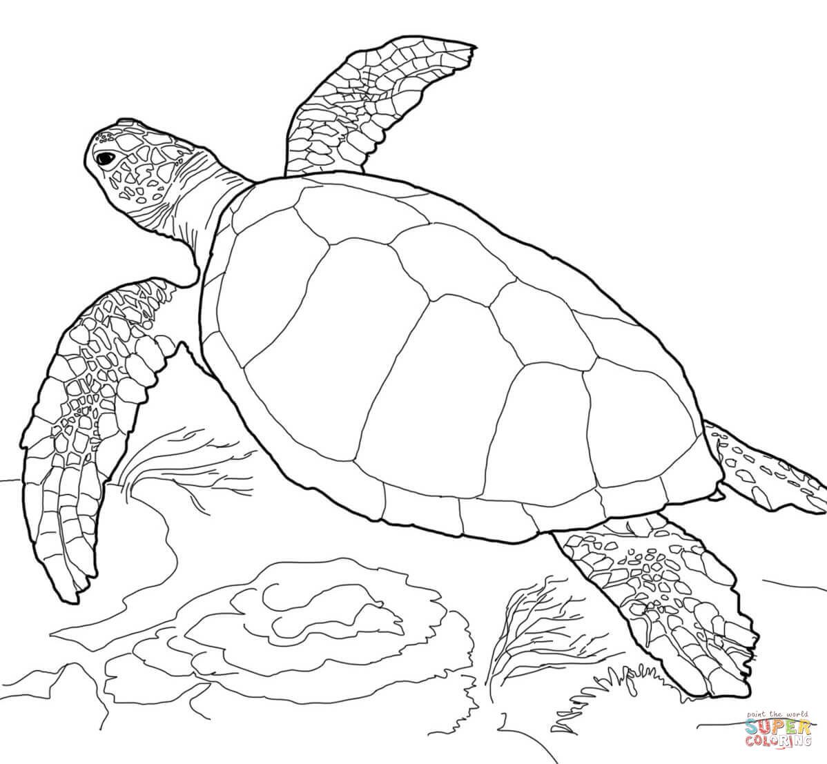 1198x1107 Green Sea Turtle Coloring Page Free Printable Coloring Pages