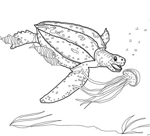 Sea Turtle Drawing Tumblr at GetDrawings.com | Free for personal ...