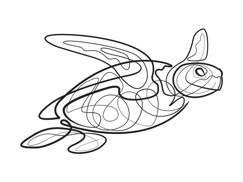 800x600 Single Line Turtle By Jonathan Russo